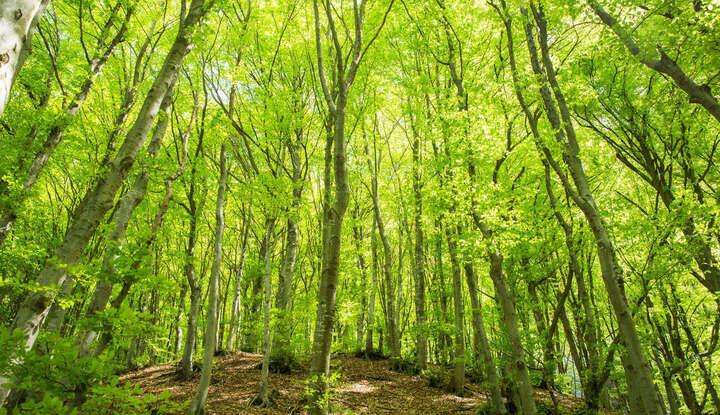 Baden in der Natur