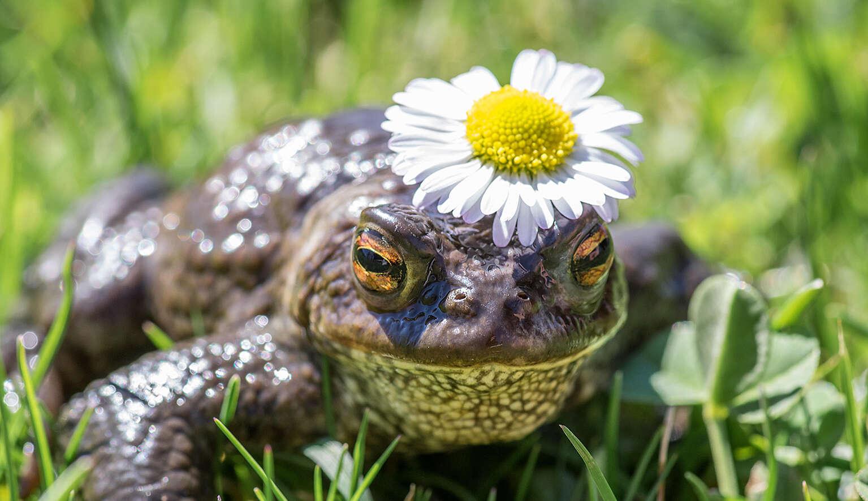 Küss den Froschkönig!